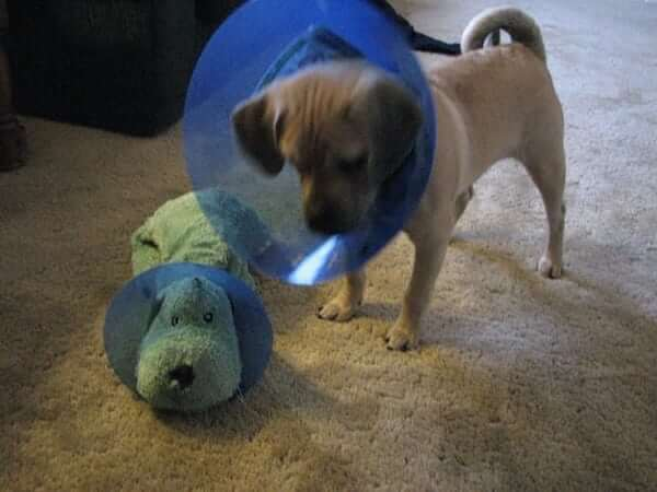 Cone of shame for his best friend.jpg