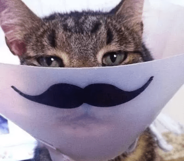 Mustache Cat Cone Of Shame.png