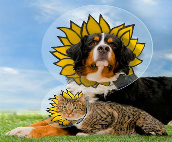 cat and dog flower cone of shame.jpg