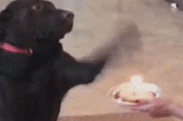 dog-knocks-cake.jpg