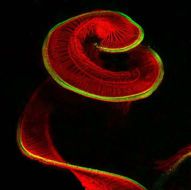 nikon-photomicrography-contest-8-28092.jpg
