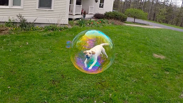 Doggo Bubble.jpg