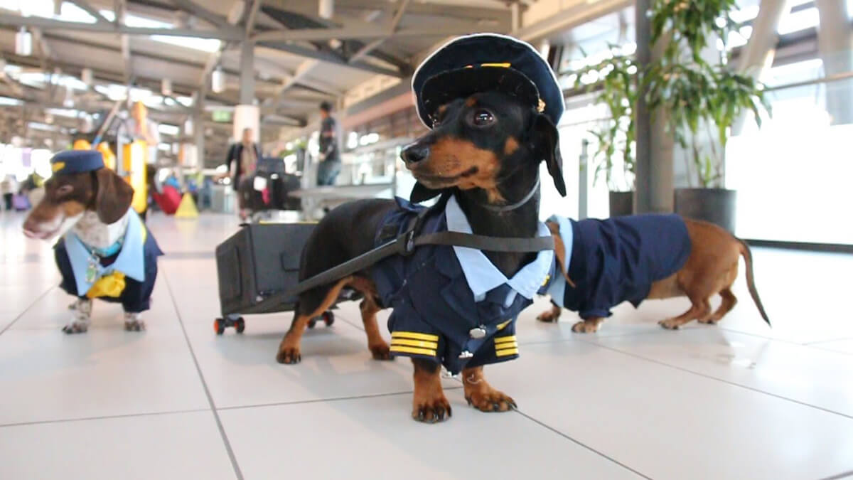 dachsund-flight-crew.jpg