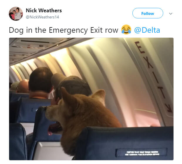 dog-in-emergency-row.jpg