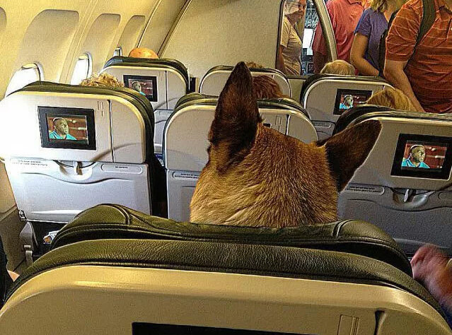 dog-watching-tv-plane.jpg