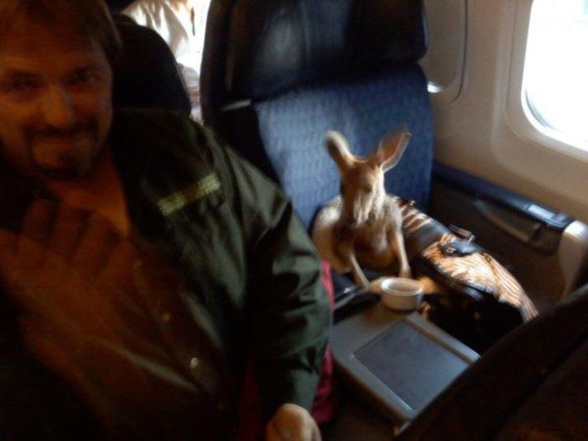 kangaroo-on-a-plane.jpg