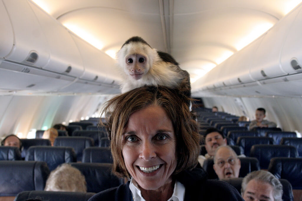 moneky-on-flight-attendant.jpg