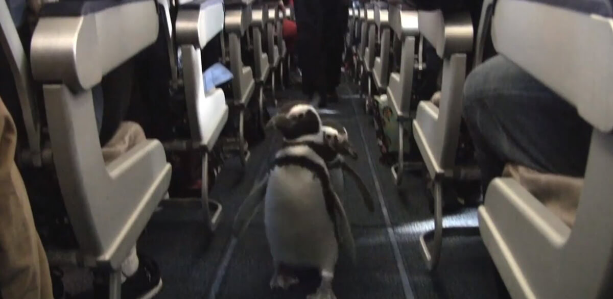 penguins-on-plane-christmas.jpg