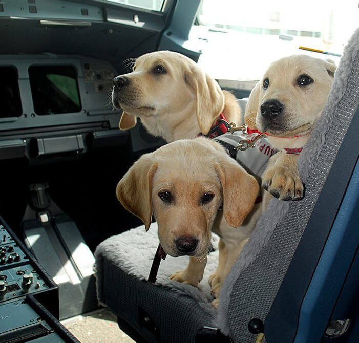 three-dogs-on-plane.jpg