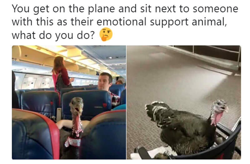 turkey-on-plane.jpg