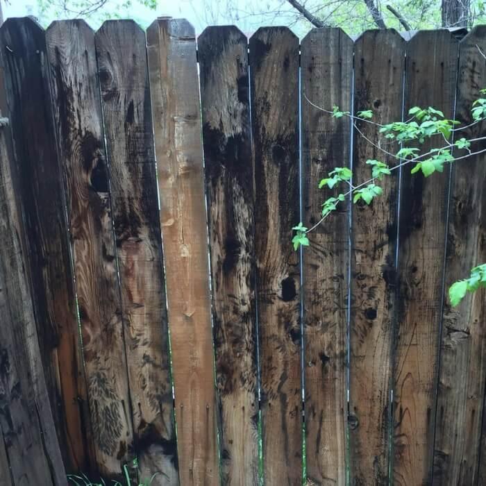 Fence Like A Wolf.jpg