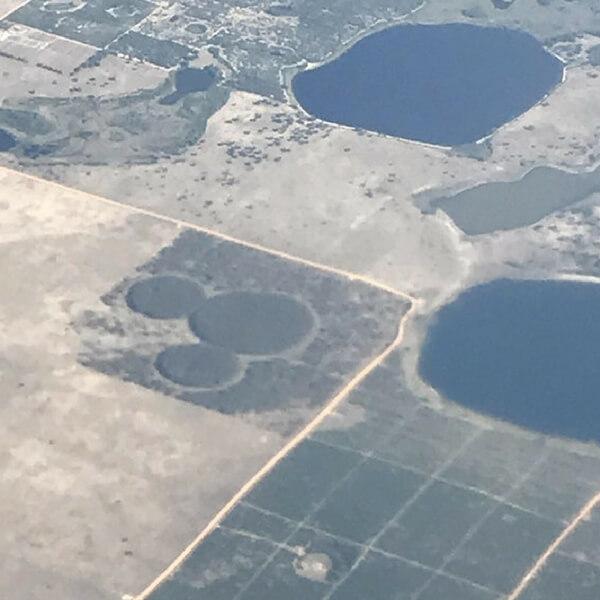 Mickey Mouse Grass Spot.jpg