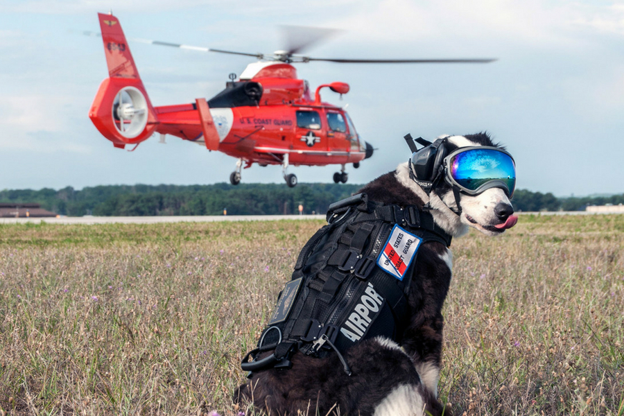 dog and helecopter.jpg