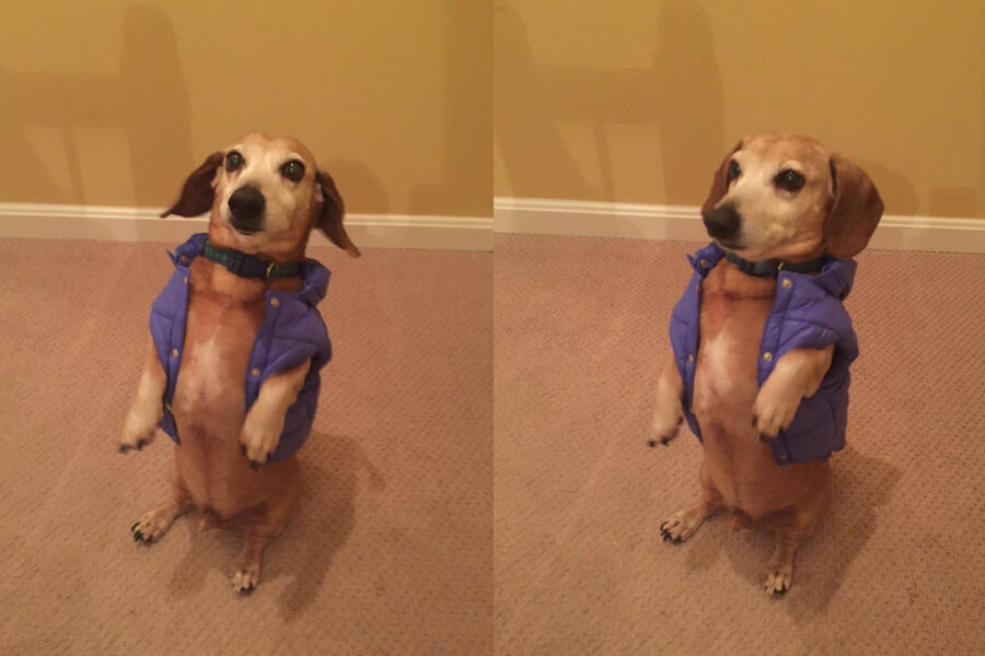 dog cant fit in parka.jpg