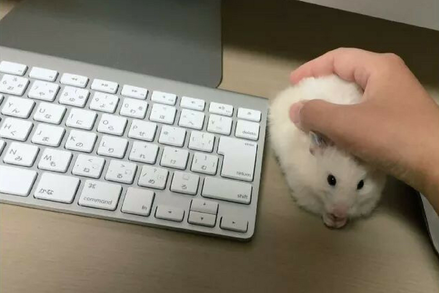 my mouse isnt working.jpg