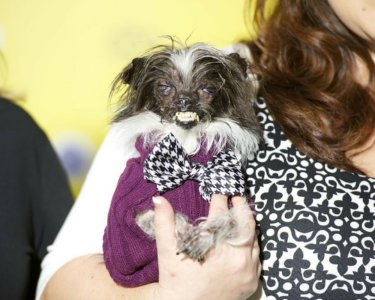 These Dogs Are So Ugly That They're (Almost) Cute 5
