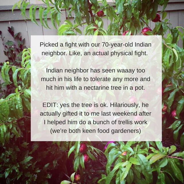 Picked a fight with our 70-year-old Indian neighbour. Like, an actual physical fight. Buddy is in his 30's. Indian neighbour has seen waaay too much in his life to tolerate any more and hit him with a nectarine tree .jpg