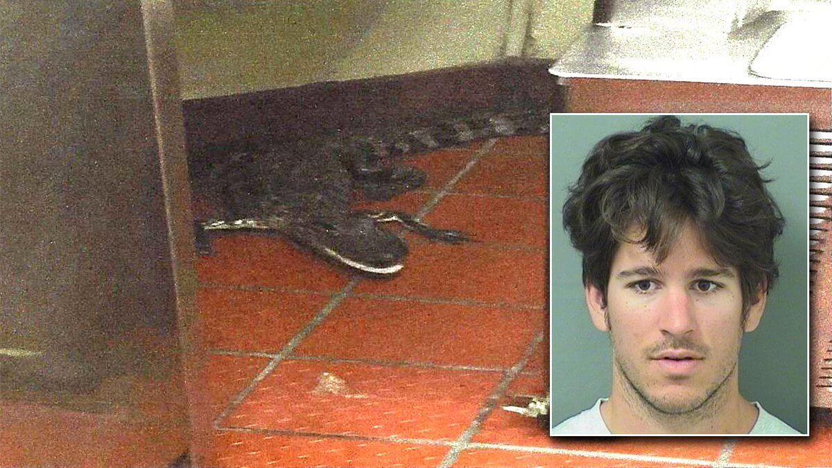 alligator in wendys.jpg