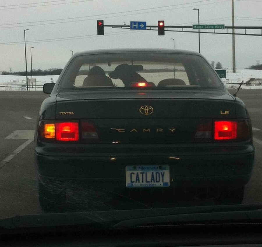 cat lady with a dog in the car.jpg