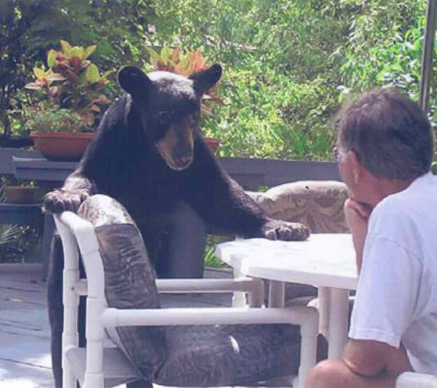 staring contest with a bear.jpg