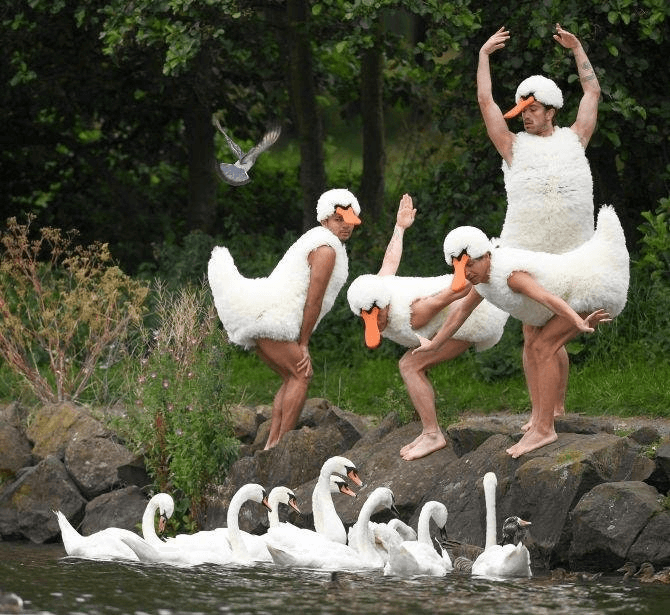 swan family.png