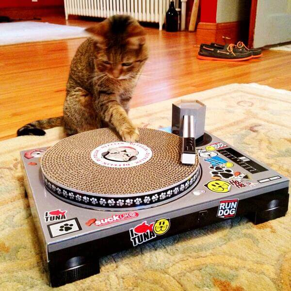turntable cat.jpg