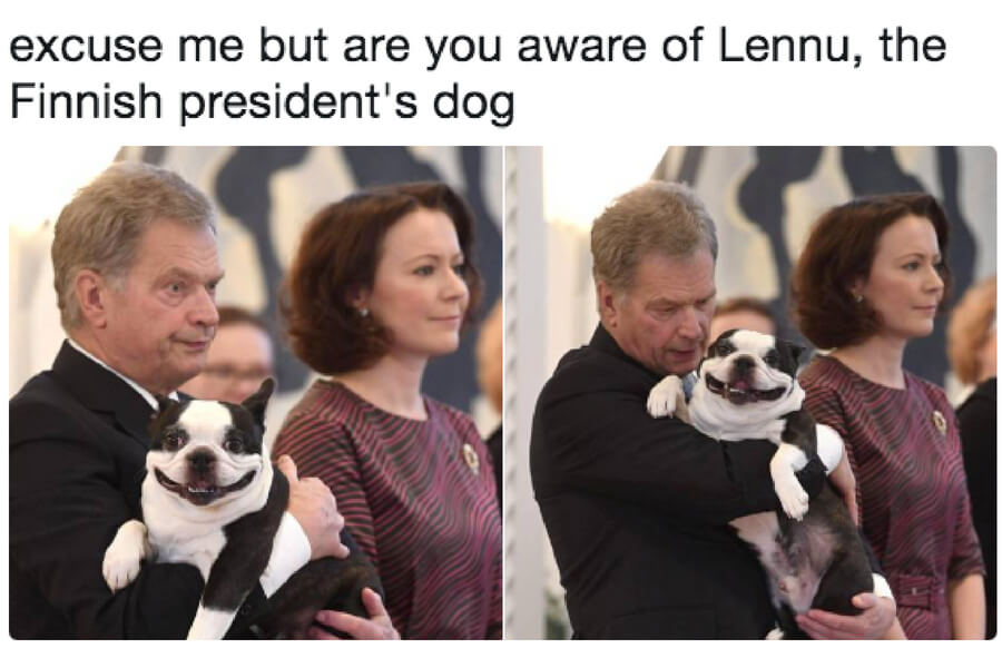 lennu the dog.jpg