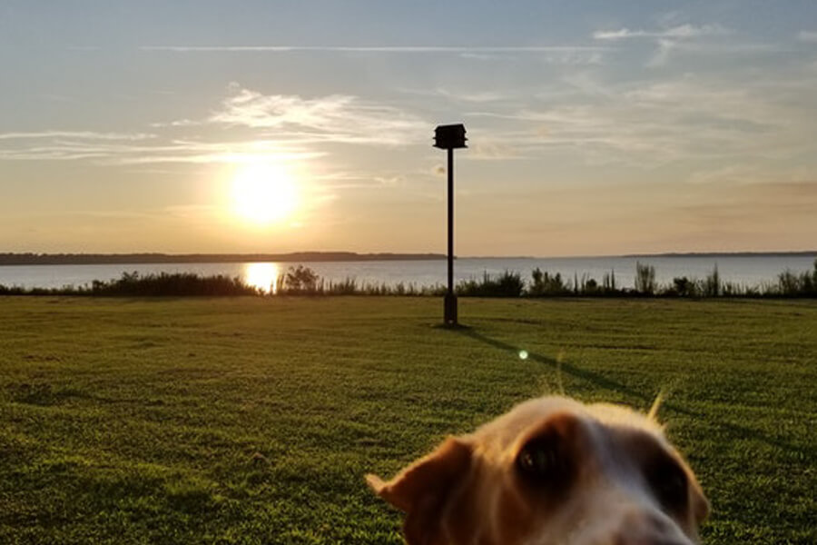 sunset dog.jpg