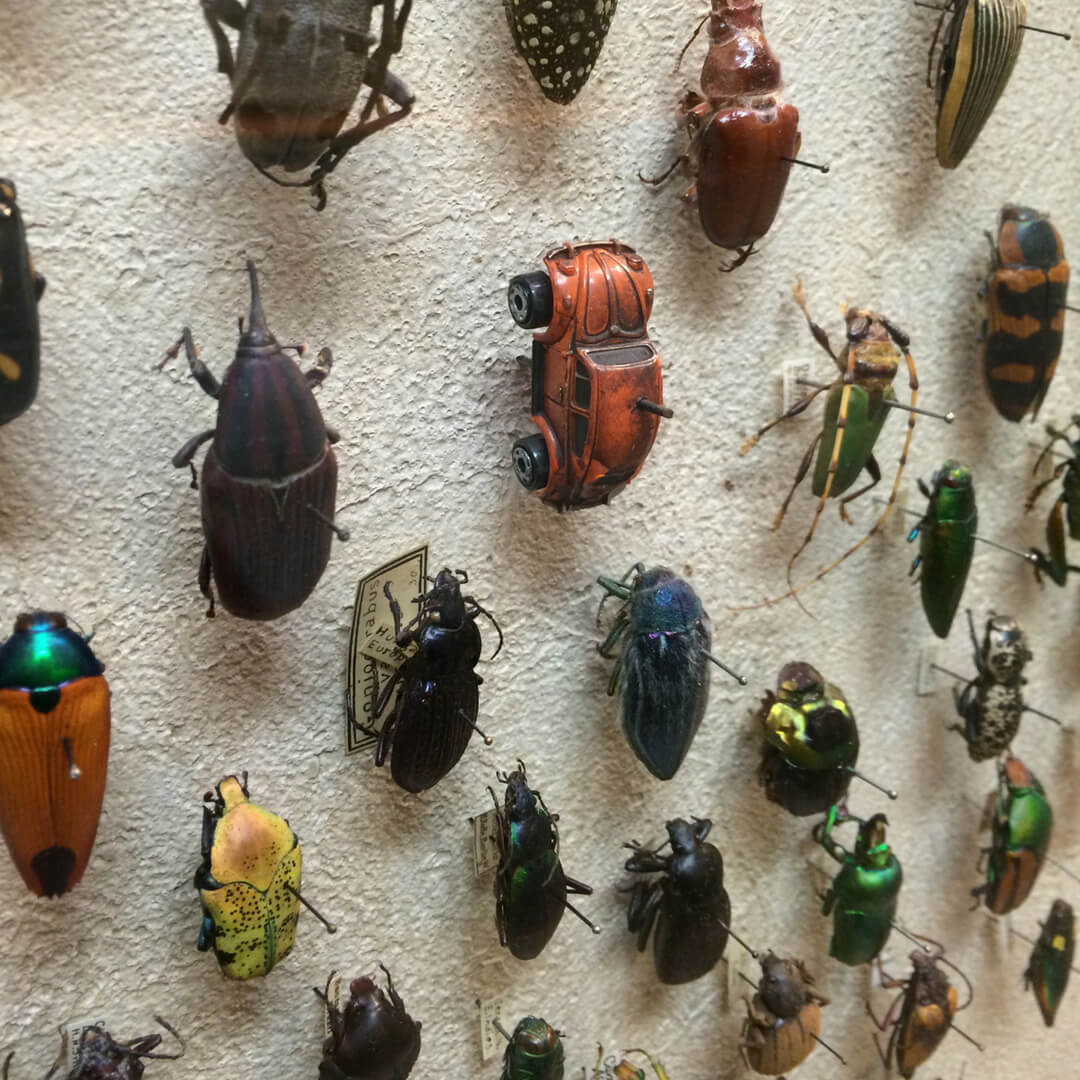 beetle exhibit (1).jpg