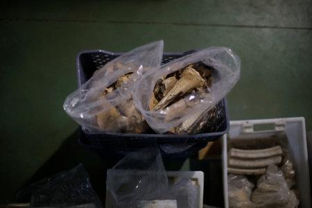 Roman Remains Found Buried Under Restaurant In Lisbon